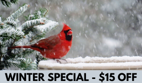 WINTER SPECIAL - $15 OFF