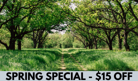 SPRING SPECIAL - $15 OFF